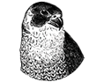 Small Business Webdesign Peregrine Web - Falcon Icon